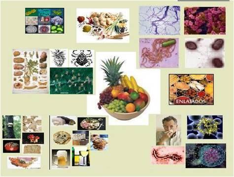 [microbiologia.jpg]