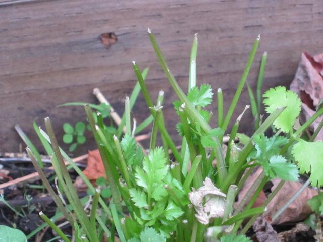 ¿Qué comen las orugas? - Plantas huésped de Caterpillar