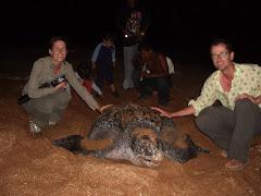 Nesting leatherback