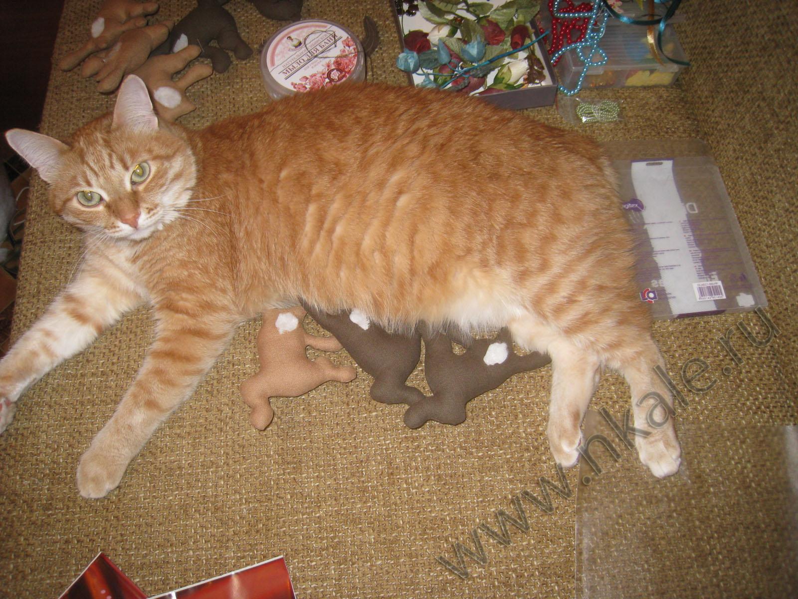 Спящие коты выкройка