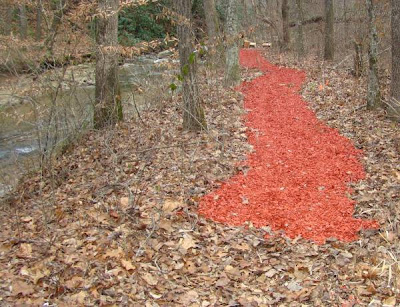 red wood chips