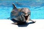 дельфины дельфинарии