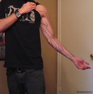 How To Get Veiny Arms Naturally