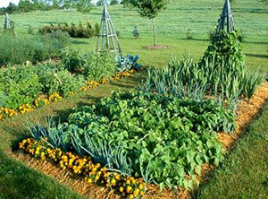 Country vegetable garden for Country vegetable garden ideas
