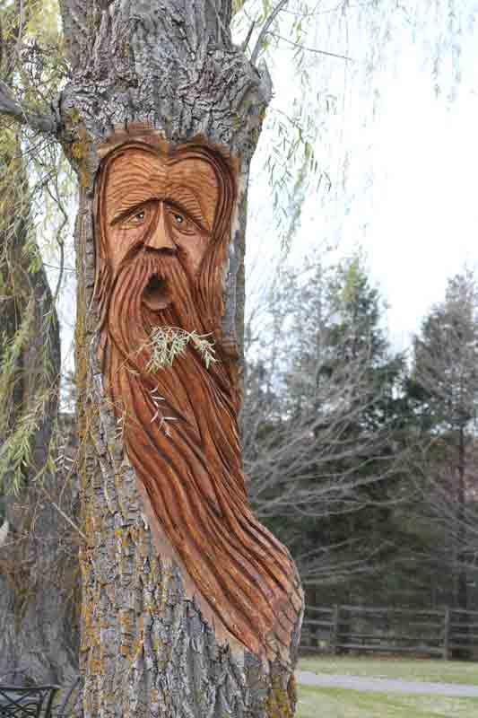 East gwillimbury cameragirl carved tree sooc
