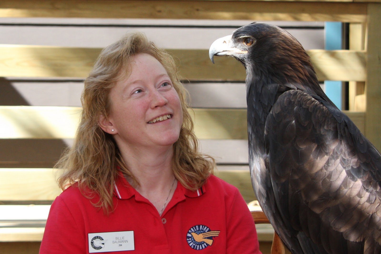 Comparação do tamanho de águias  com relação ao homem. 0329_Billie+B_H