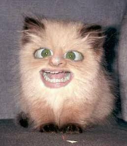 weird cat
