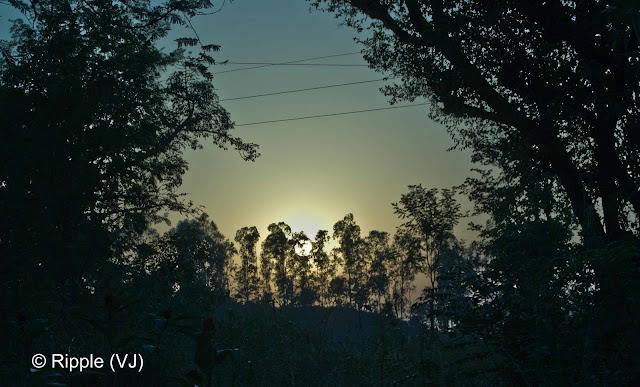 Posted by Ripple (VJ) : Govind Sagar Lake @ Lathiani, UNA, Himachal Pradesh: Sun behind a series of Trees @ Lathiani, Himachal Pradesh