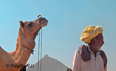 Posted by Ripple (VJ) :  Pushkar Camel Fair 2008 : Another Camel Trader looking for the buyers @ Pushkar Camel fair 2008