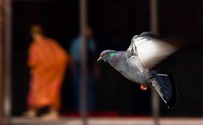 Posted by Ripple (VJ) : Flying Pigeon @ Jama Masjid, Delhi-6 : ripple, Vijay Kumar Sharma, ripple4photography, Frozen Moments, photographs, Photography, ripple (VJ), VJ, Ripple (VJ) Photography, Capture Present for Future, Freeze Present for Future, ripple (VJ) Photographs , VJ Photographs, Ripple (VJ) Photography,
