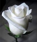 Esta rosa es un regalo de mi amiga Arantxa.