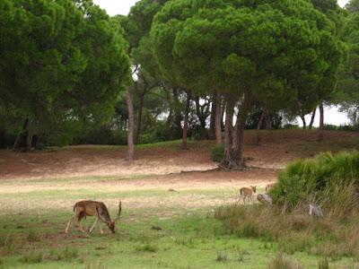 Национальный заповедник Кото-Доньяна,уэльва,Андалусия