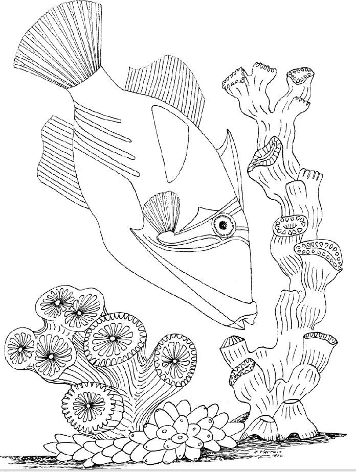Line Art Underwater : Images about zentangle underwater on pinterest