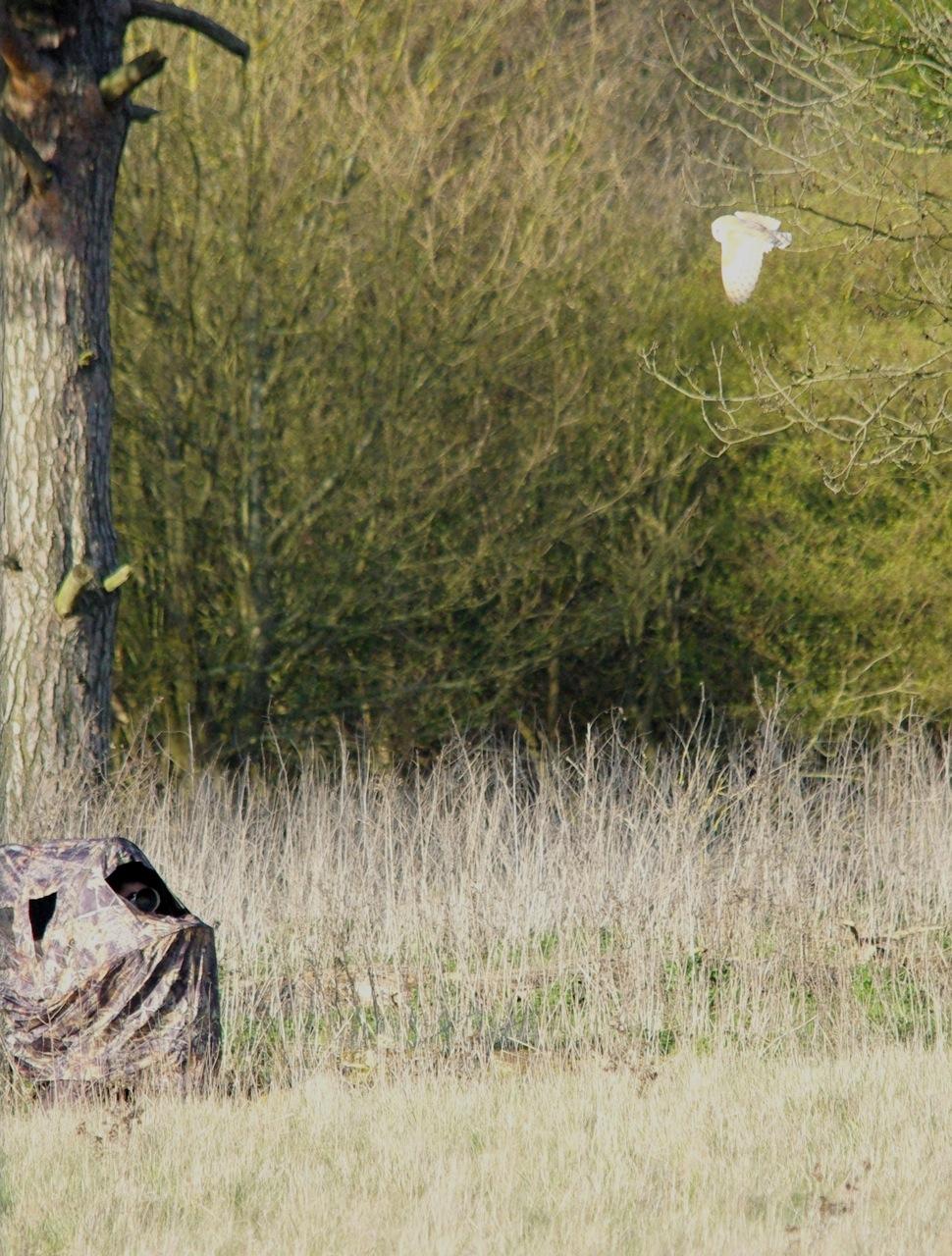 the wonderful Barn Owl