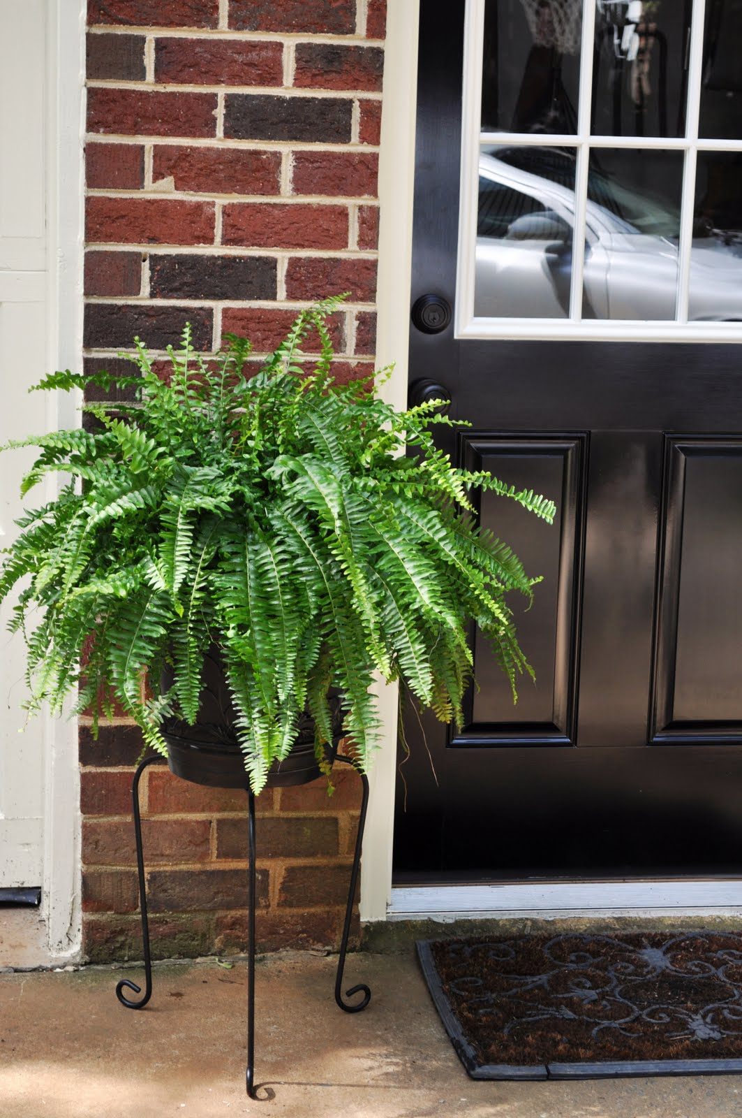 Foyer Plant Stand : The collected interior sprucing up entryways with ferns
