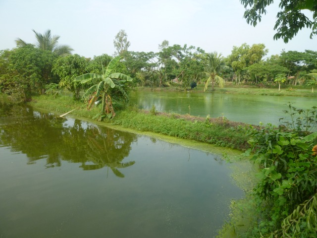 pond in india ForKoi Pond India