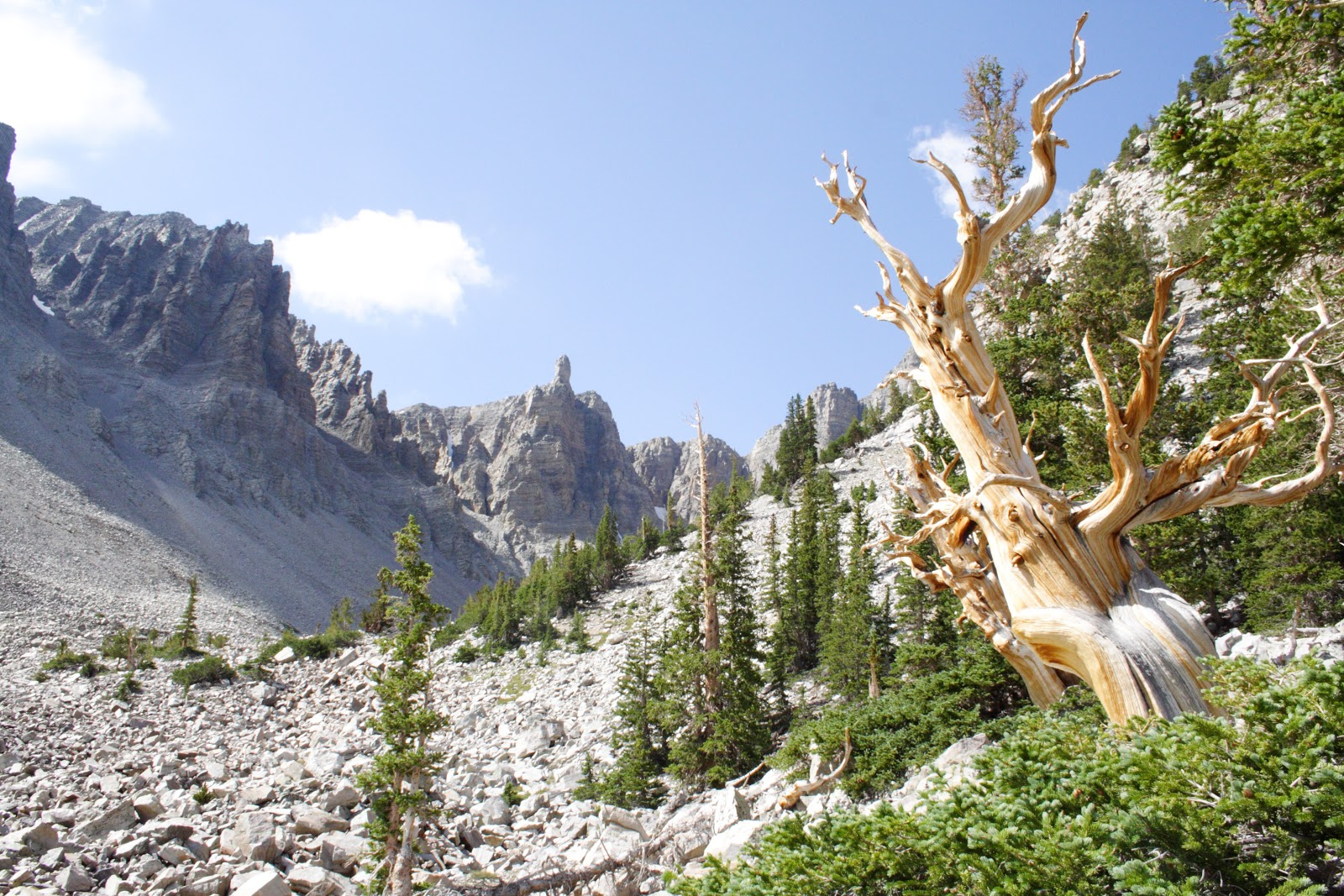 Matt 39 s photo blog great basin national park bristlecone pine grove - Pinne dive system ...