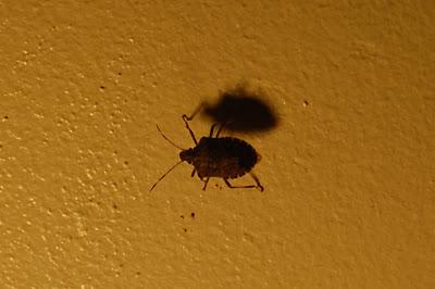 Stink bug.