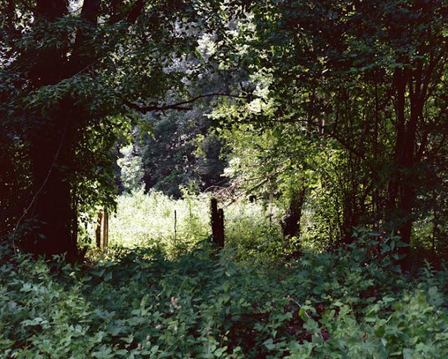 Secret Garden by Allie Mount