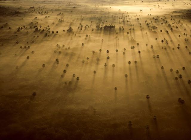 Amazing Wildlife Photography by Robert B. Haas   Photography Blog