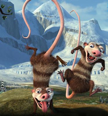 rata gigante (tlacuache)