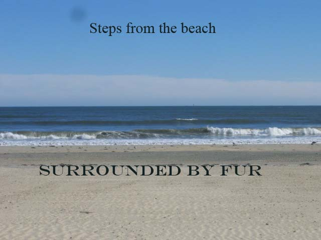 Steps fom the beach - surrounded by fur
