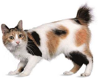 Cat Pet Shop: Kucing J...