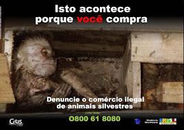Campanha do IBAMA.
