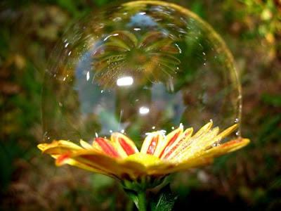 http://2.bp.blogspot.com/_Y5U2y3o5y8o/Sk26WGp-t9I/AAAAAAAABu0/Pe2ivigO9rI/s400/Bola+de+sab%C3%A3o+e+uma+flor.jpg