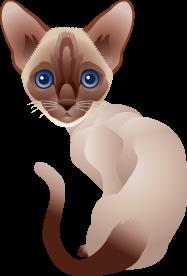 decoupage gatos