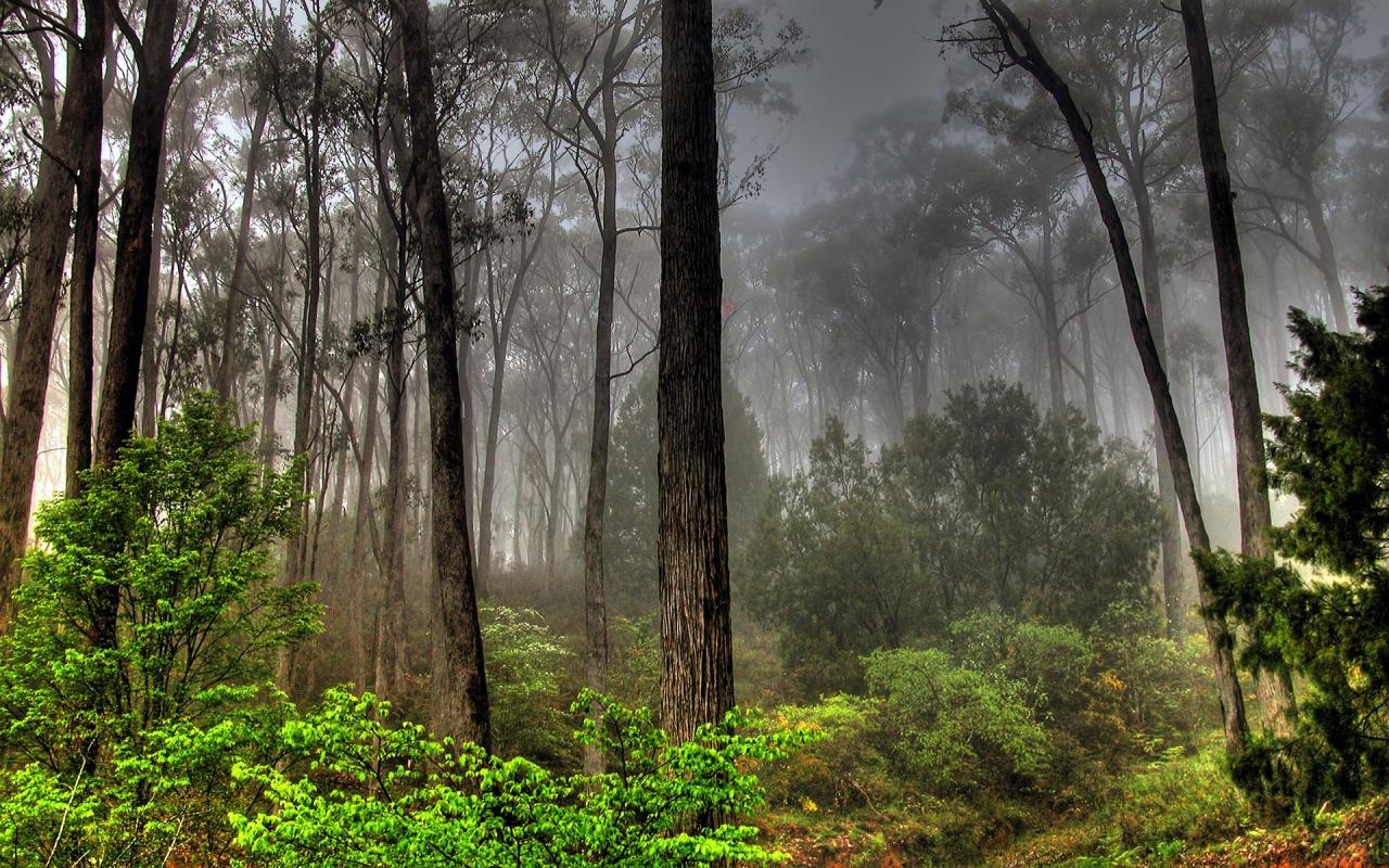 http://2.bp.blogspot.com/_Y6cAsrJqtbA/TMb0cf3GTFI/AAAAAAAABag/MIi5cz8i_YU/s1600/forest-landscape-1280-800-38.jpg