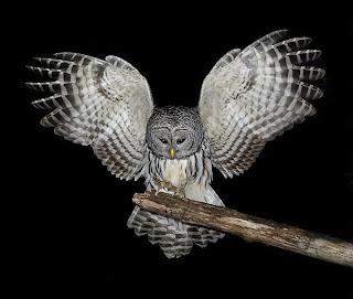 owl at purdue