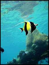 A wonderful  yellow-black fish