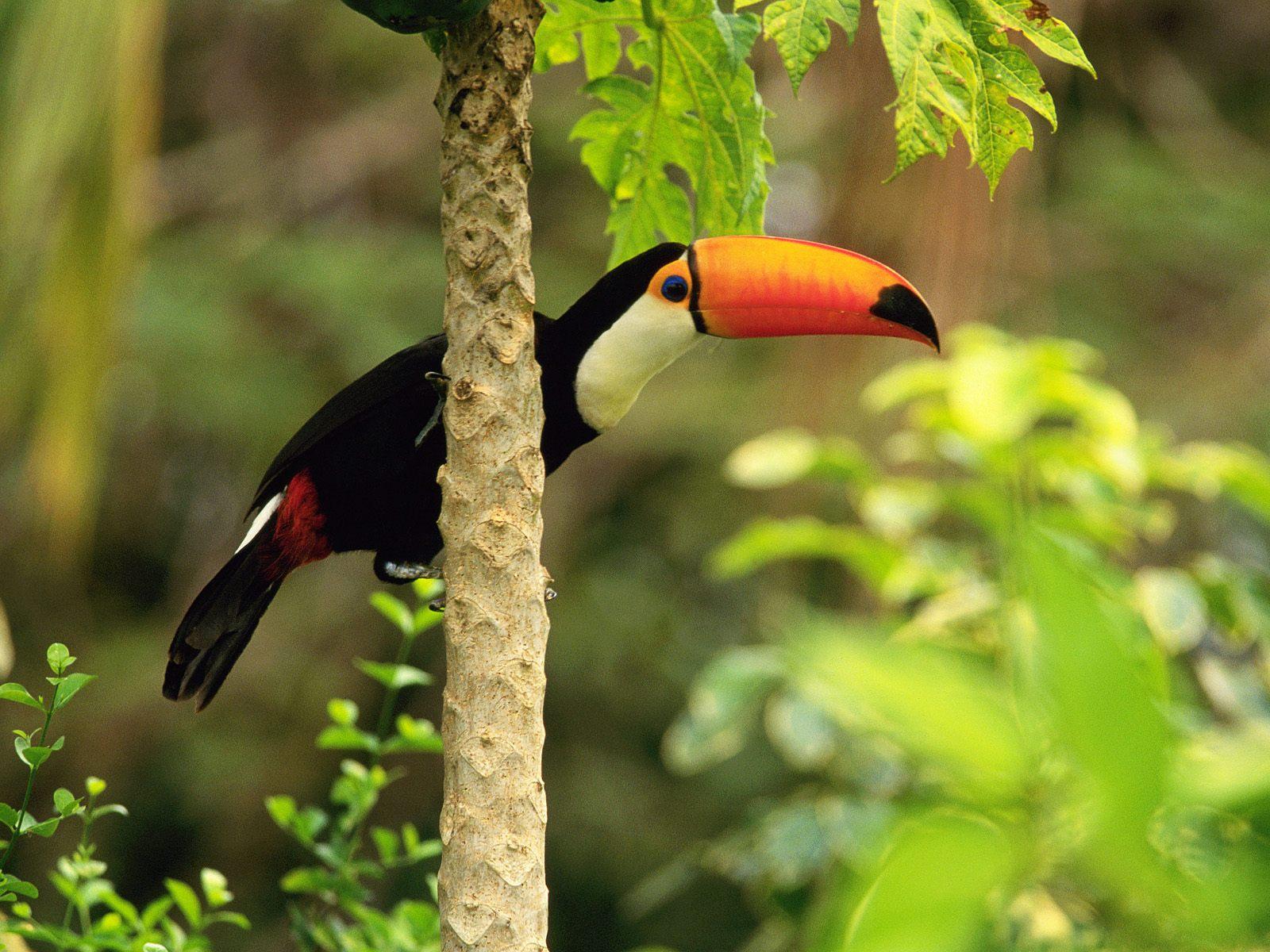 Exotic Bird 7