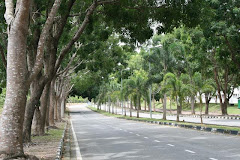 Jom tanam pokok