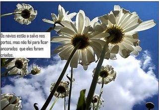 da AMIGA JASMIM