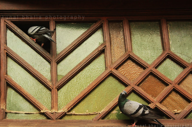 pigeons peeping into a window in mumbai by kunal bhatia
