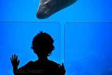 Child silhouette at aquarium with leopard seal