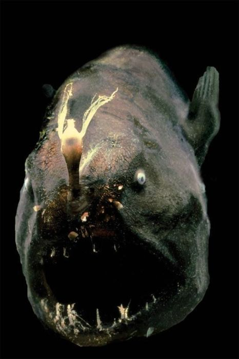 Photos of most scariest fish in the world, gathered from different ...