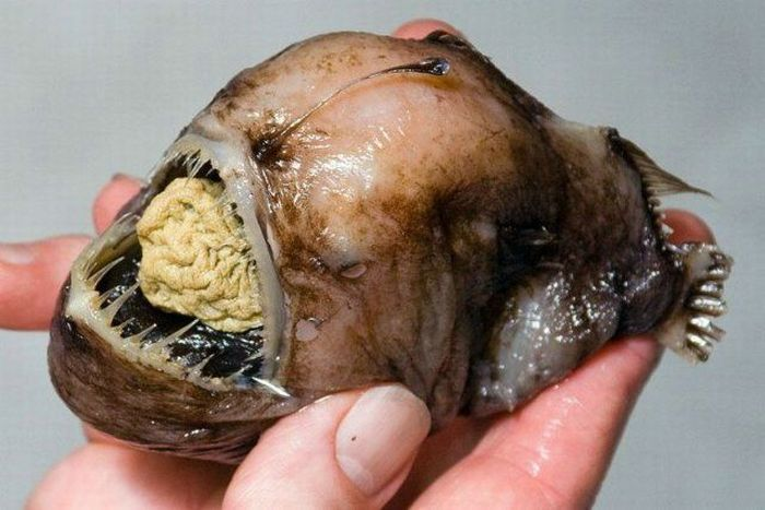 Scariest Fish In The World http://shugalmelaa.blogspot.com/2010/12/most-scariest-ever-fish-photos.html