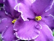 As flores da primavera.