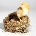 Nicci's Nest