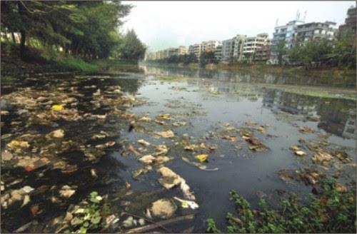 environment in india essay