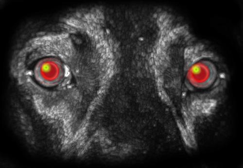 black ghost dog