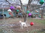 Sidney Under His Tree