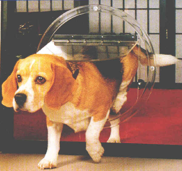 Glass Dog Doors Facts You Need To Know Part 2pictures Of Dogs