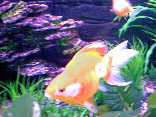 ikan emah yang mengeluarkan cahaya solar ketika gambarn