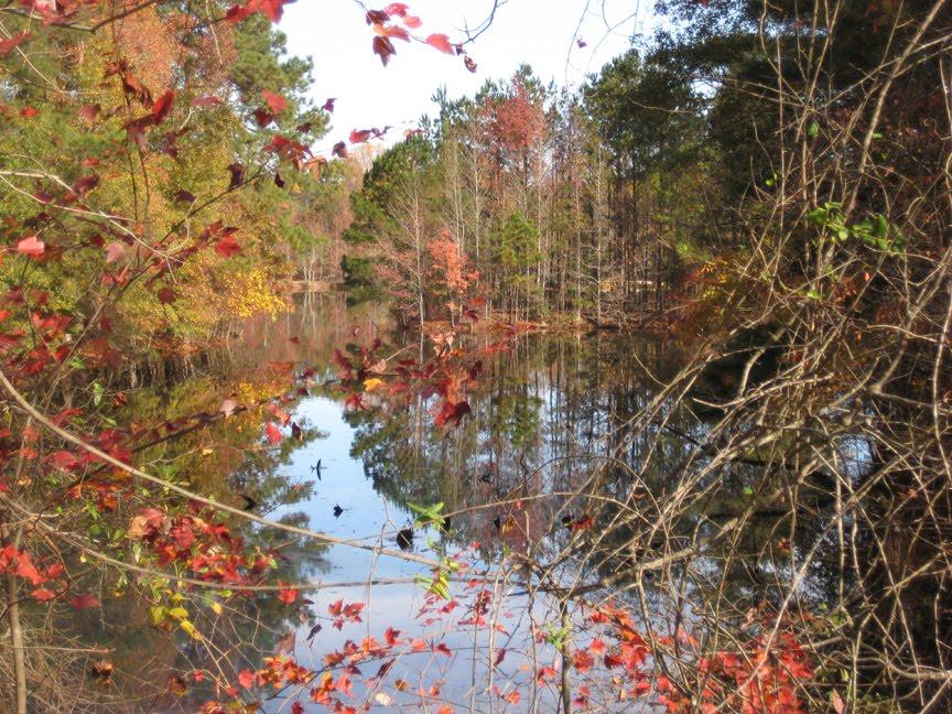 [Reflecting+Pond,+Rte+34+,+SC.JPG]