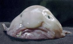 Blobfish - Ain&#39;t He Cute?