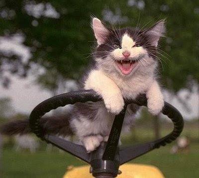 cat+mowing+lawn.jpg